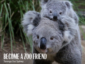 Become a Zoo Friend